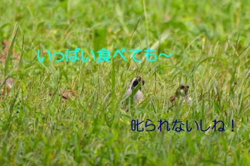 060_2016101118592072e.jpg