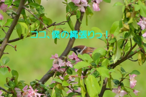 070_20160413021005b14.jpg