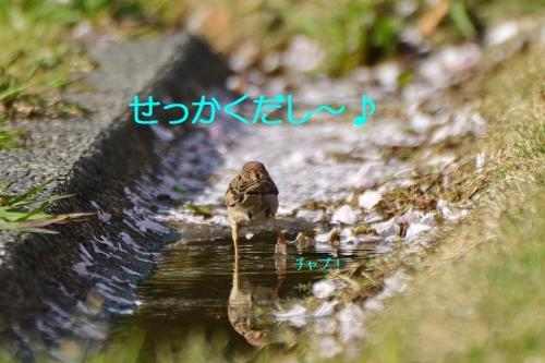 070_20160422193802abc.jpg