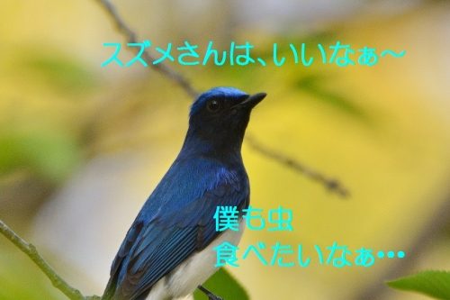 070_20160427190744a07.jpg
