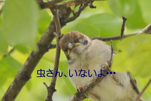 070_20160511211359df2.jpg