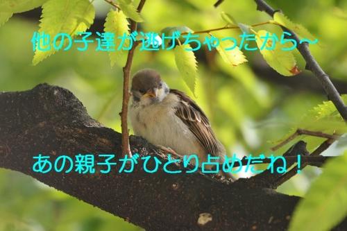 070_20160615194805529.jpg
