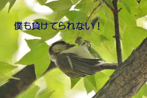 070_20160703225311194.jpg