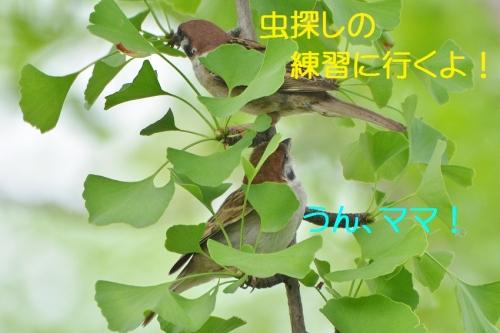 070_201608032144075c6.jpg