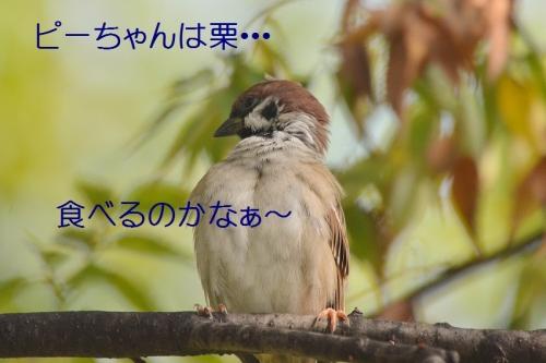 070_20161012200919421.jpg