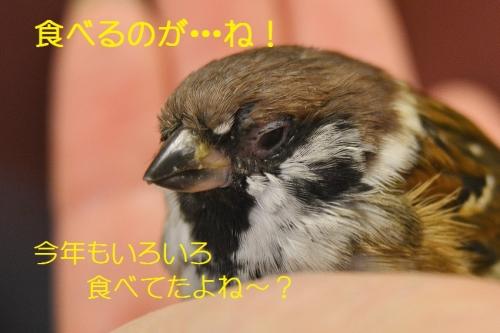 080_20160412183238c12.jpg