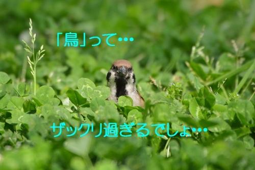 080_2016042619141036e.jpg