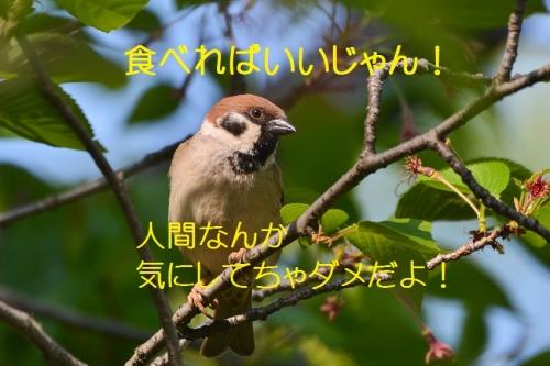 080_201604271907459df.jpg