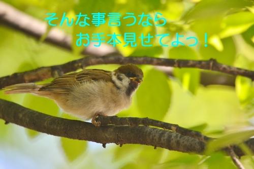 080_201605212138110bd.jpg