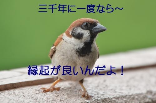 080_201607132130241d8.jpg