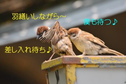 080_20160721185756dee.jpg