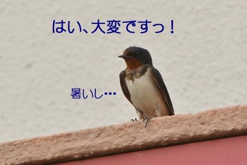 080_201607292038118ac.jpg