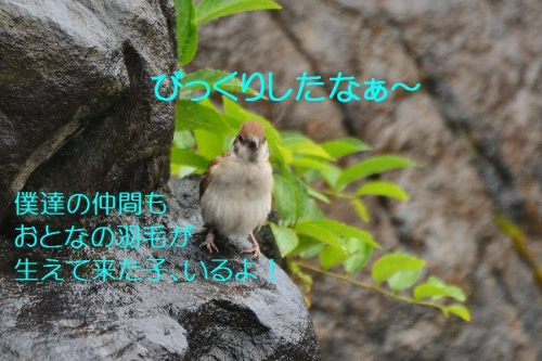 080_2016080621070522b.jpg