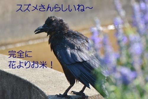 080_20160828185217eeb.jpg