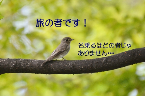080_201610022000367d3.jpg