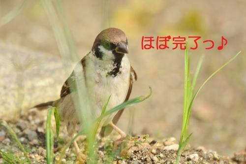 080_20161005193845e59.jpg