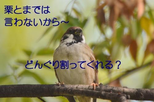 080_2016101220092138c.jpg