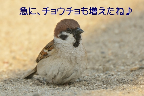 090_20160506201703439.jpg