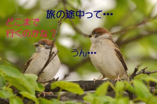 090_20160508203320714.jpg