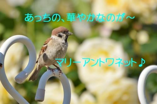 090_20160602214534baa.jpg