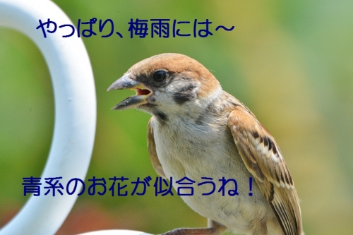 090_201607042101027b1.jpg