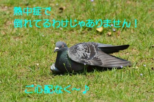 090_201607151841324e9.jpg