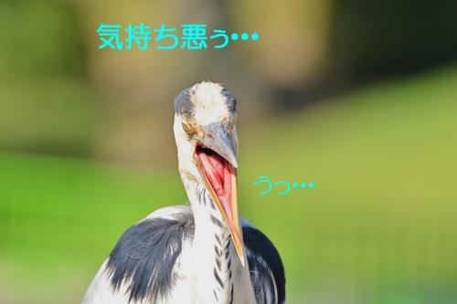 090_20160720194136af1.jpg
