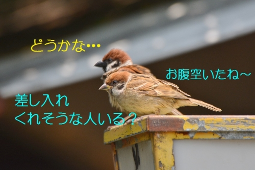 090_2016072118575888a.jpg