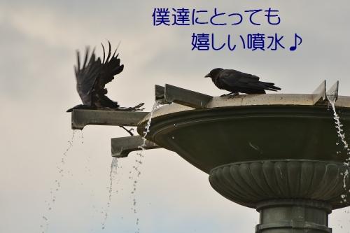 090_20160724201534913.jpg