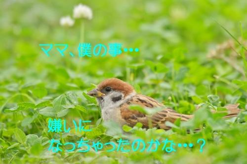 090_20160801215846c97.jpg