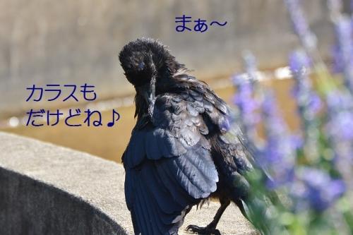 090_20160828185218819.jpg