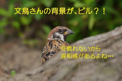 090_20160920182937ad7.jpg