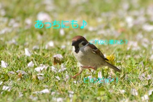 100_20160424205449e1e.jpg