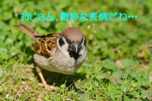 100_20160426191413df2.jpg