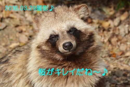 100_201606172053336d3.jpg