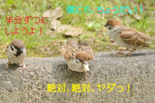 100_20160706180127ea0.jpg
