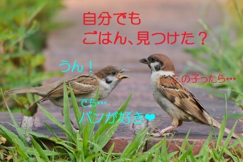 100_20160902184933081.jpg