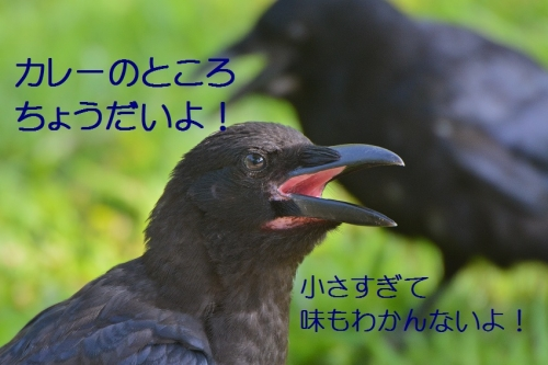 100_20160905193405e03.jpg
