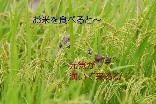 100_20160916192037036.jpg