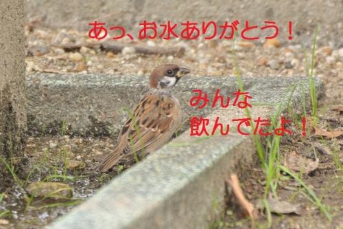100_20161003192515d44.jpg