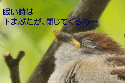 105_2016051121144753b.jpg