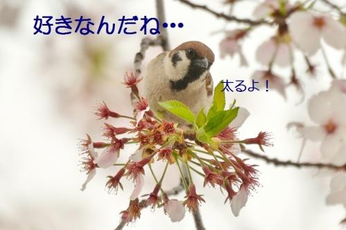 110_20160412183336e29.jpg