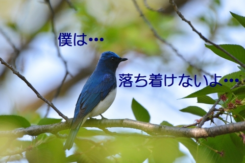 110_20160427190821bcc.jpg