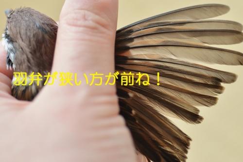 110_2016052900111554e.jpg