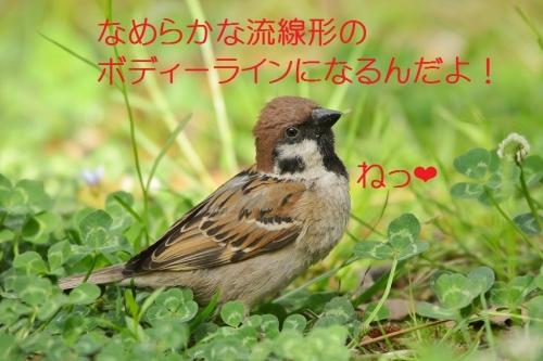 110_20160529005127497.jpg
