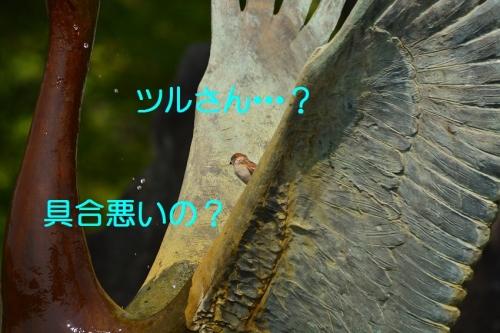 110_201606112058320f0.jpg