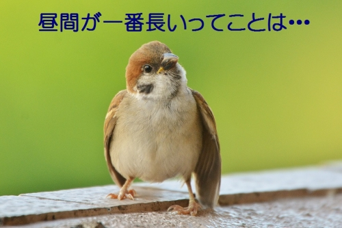 110_20160621210148cef.jpg