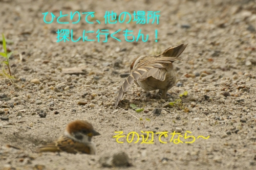 110_20160630191422ba4.jpg