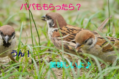 110_201608112006111bd.jpg