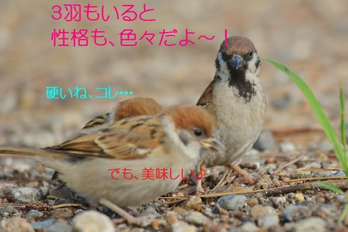 110_20160818192001a41.jpg